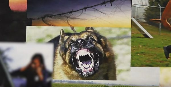 Capcom hampir sempat menyuntikkan anjing peliharaan untuk Baker Family bernama Diane.