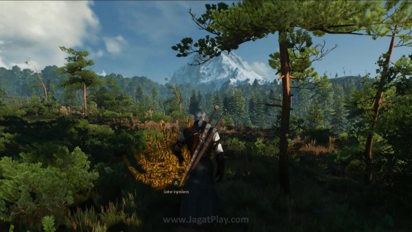 The witcher 3 wild hunt (42)