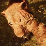 Far Cry Primal 101 21