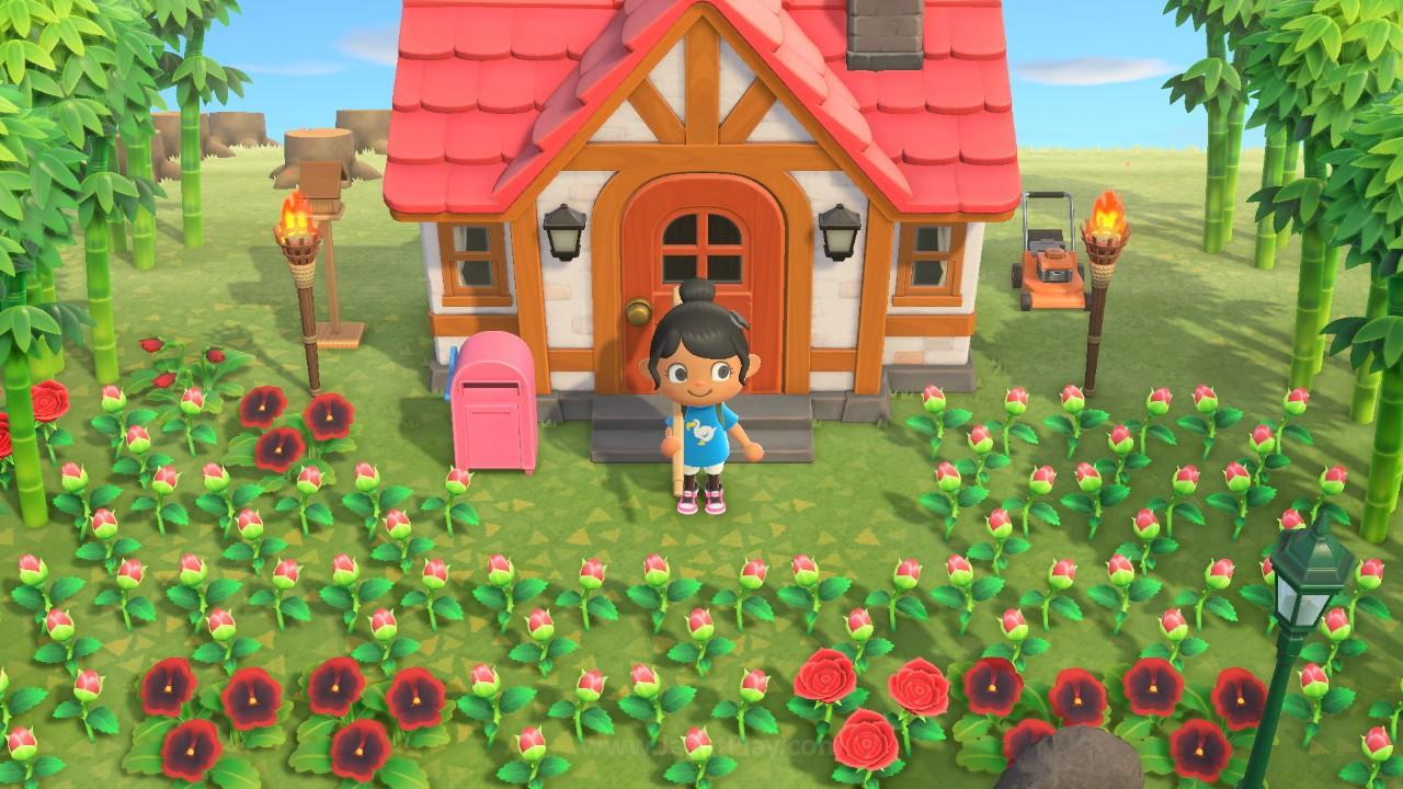 Animal Crossing New Horizons jagatplay part 2 64